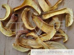供应野生食用菌红葱菌