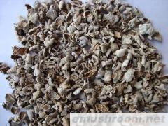 供应白参、白参菌、裂褶菌干品
