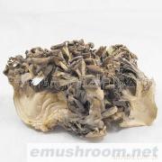 批发供应贵州山野特产特级灰树菇