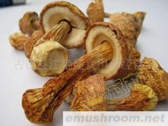 供应特级姬松茸/巴西蘑菇/姬松菌/姬松菇(图)