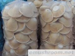 供应草菇,鸡腿菇,双孢菇平菇白灵菇等