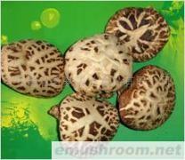 供应 绿色食品 食用菌花菇