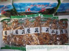 东北野生黄蘑
