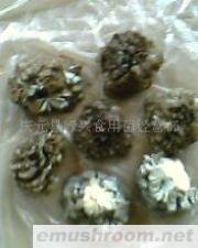 供应食用菌,盐渍灰树花