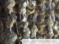 供应黄蘑菇