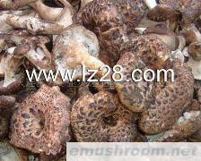 供应虎掌菌、枣翘鳞肉齿菌
