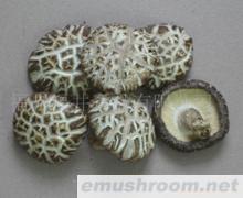供应菌床足付白花菇