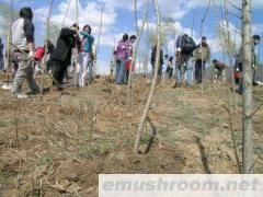 供应植树造林专用保水剂